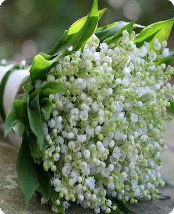 Картинки цветы красивые букеты 70 фото Скачайте бесплатно!
