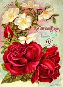 Старая открытка 1897 года (19 век)