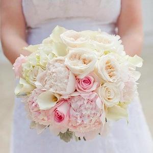 Самые красивые розы на свете  много ФОТО роз