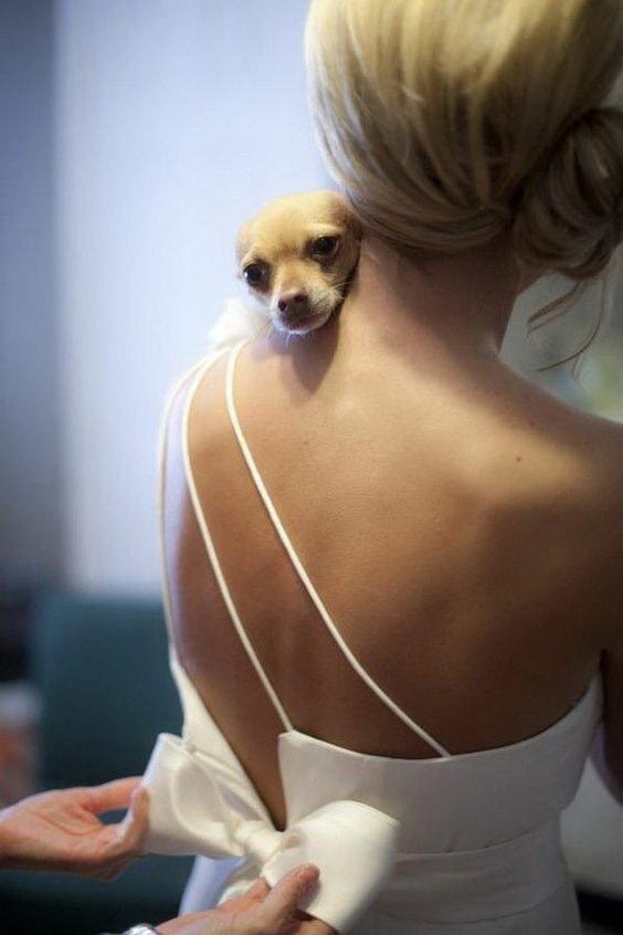 Маленькая собачка и невеста