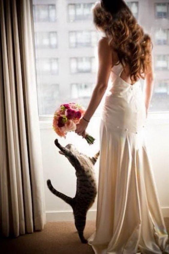 Котик и невеста