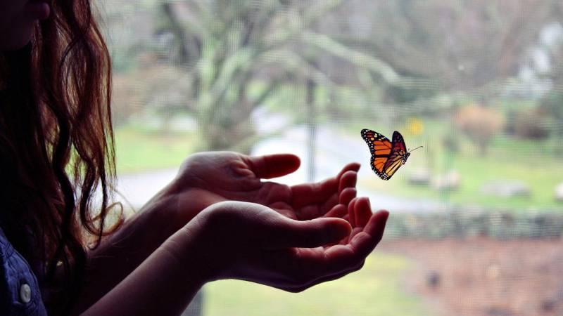 Бабочка в руках