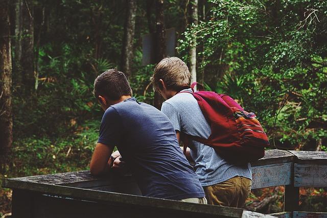 Друзья в лесу