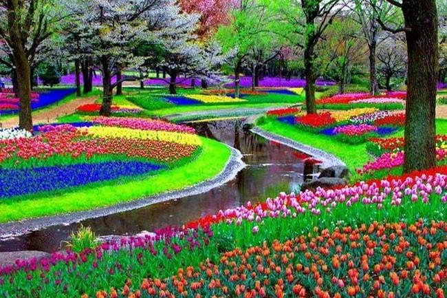 Города, в которых можно увидеть самые красивые цветы